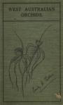 Pelloe West Australian Orchids-2